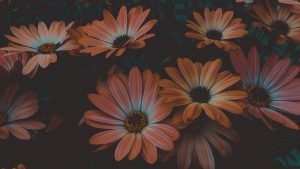 Colourful daisy-type flowers