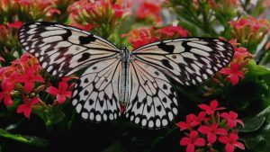 Butterfly with wings spread on a flowering shrub