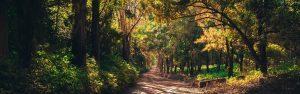 Long winding path through woods