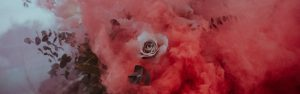 An explosion of red mist with a delicate rose at the centre