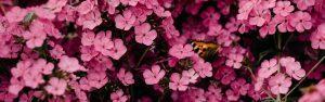 Butterfly in flowers