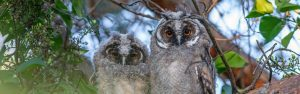 Two Wise Owls