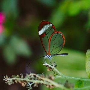 Butterfly on plant