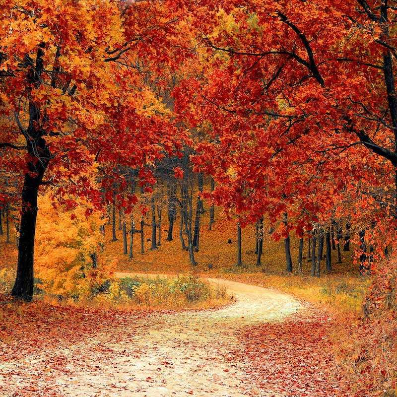 Leaves will turn red in response to trauma (as well as autumnal weather) as plant stress hormones are released